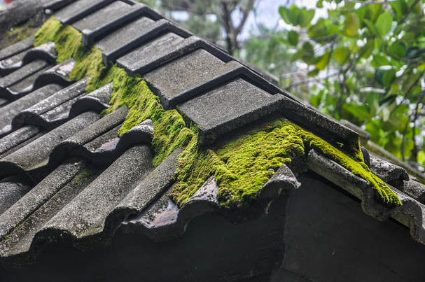 moss-cleaning