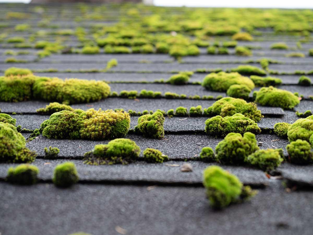 Leien dak schoonmaken